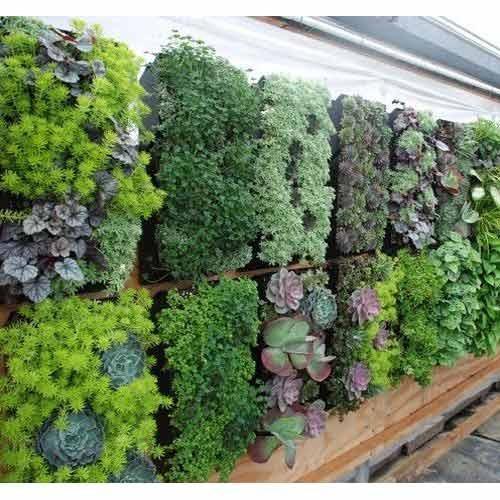 گیاهان باغ سبز عمودی